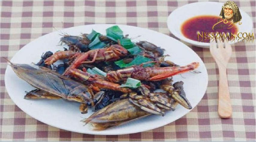 دراسة علمية أكل الصراصير مفيد للصحة