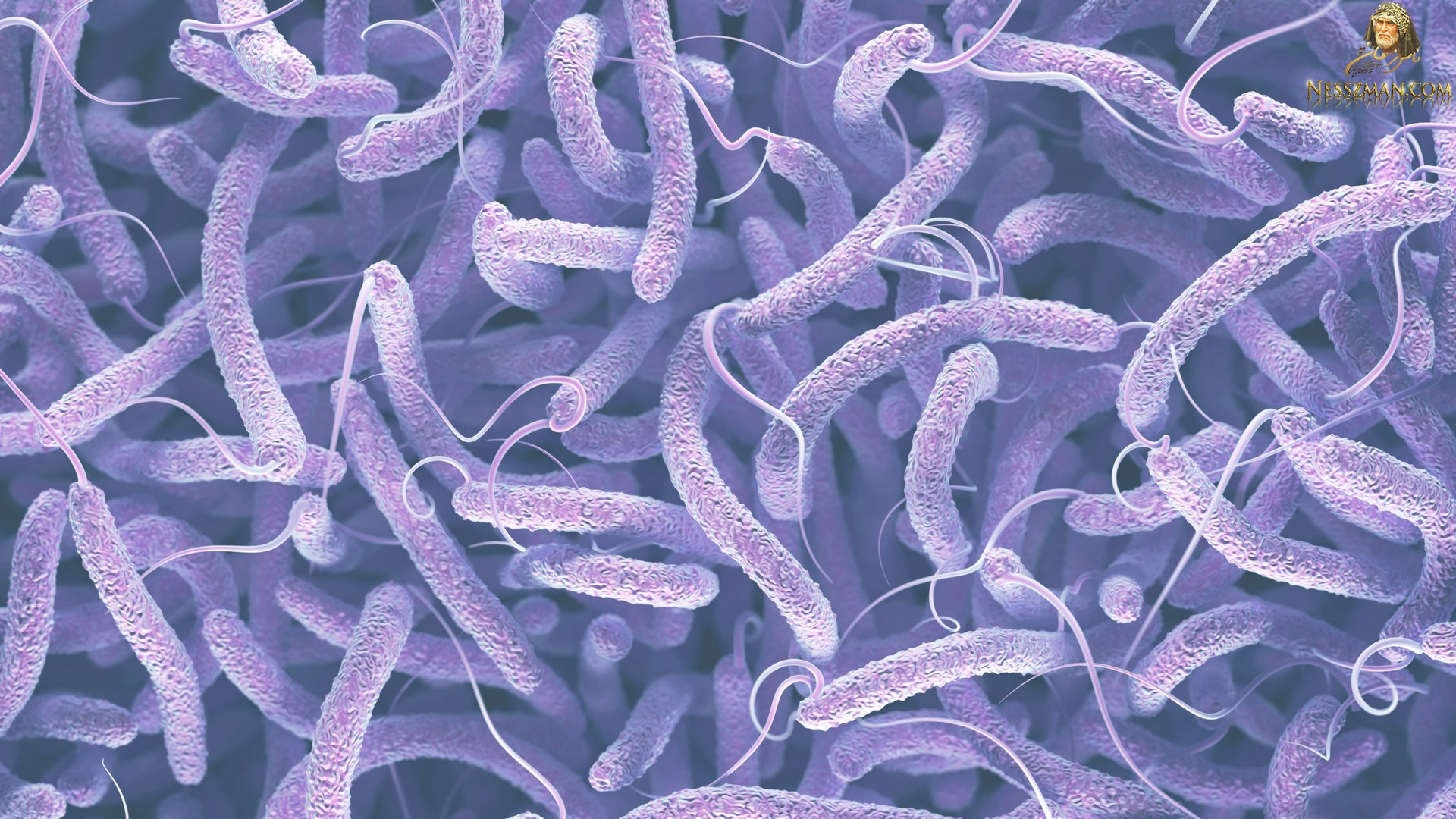 عاجل الجزائر إرتفاع عدد الإصابات بالكوليرا إلى 74 حالة